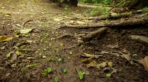 Time Lapse, Leafcutter Ants On Forest Floor