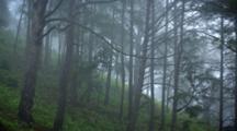 Time Lapse, Trees On Hillside In Dense Mist Or Fog