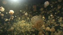 Swimming Through Thousands Of Jellyfish With Reflection In Surface