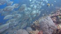 Pov Traveling Shot Over Colorful Coral Reef Towards School Of Silver Fish
