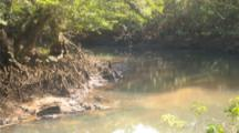 Timelapse Of Tide Going Out And Exposing Mangrove Roots In Estruary