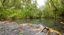 Palauan Jungle River
