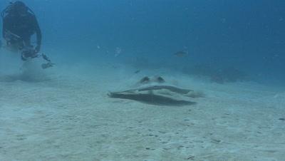 Underwater Photographer and Stingray