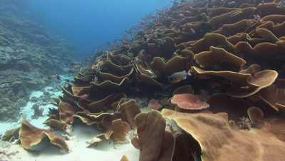 Tilt up to complex Coral reef fish and SCUBA Divers