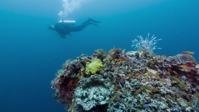 Traveling,panning shot of SCUBA Diver and coral outcrop