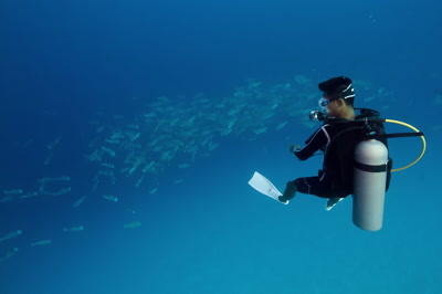 SCUBA dive watches Bumped parrotfish spawning aggregation