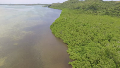 Aerial shot descending towards Mangroves and shoreline