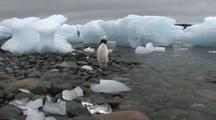 Adelie Penguin And Ice Formations Antarctica