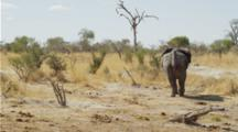 Elephant Walking Away