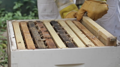 The apiarist or beekeeper operates the beehives to produce honey and related products such as beeswax, specifically one who cares for and raises bees for commercial or agricultural purposes.