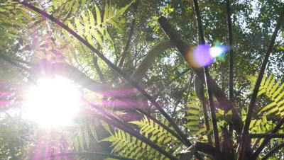Snake in tree fern (10 of 21) - Diamond Python non-venomous snake reptile found in eastern Australia - (Morelia spilota spilota) is a subspecies of Carpet Python (Morelia spilota)