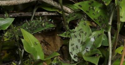 Swarming Invertebrate Stock Footage