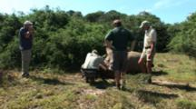 Game Warden And Others Examine Dead Rhino, Put Down After Being Poached Alive, Horns Removed