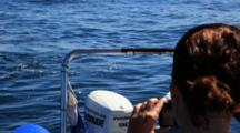 Orcas Hunting Brydes Whales During Sardine Run Activity, Watched By People On Boat