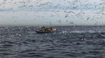 Dive Boat Surrounded By Cape Gannets Plunge Diving During Sardine Run