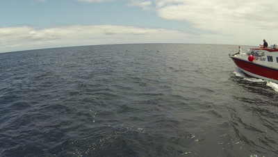 St Helena Island ,drone footage tropical dolphins from air