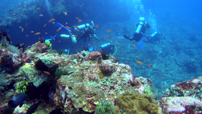 Divers swimming behind big rock full of soft coral and feather stars