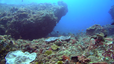 Rocks full of soft corals and cloud of colorful tropical fishes swimming around