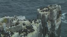 Colony Of Guillemots Roost On Top Of Cliff