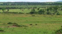 Ostrich In Serengeti NP, Tanzania