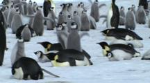 Emperor Penguins Resting Between The Chicks