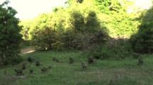 Baboons Feeding On The Grass In Lake Manyara NP
