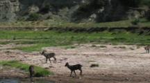 Waterbuck Walking By A River
