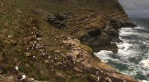 Coastal Cliff Face Views With Albatross Nesting Sites