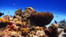 Reef Fish Swimming Over A Colorful Coral Reef