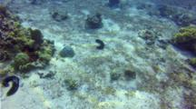 Emperor Bream Snapper Under Palausport Boat And Cloud