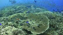 Seascape Coral Bleaching Coral Reef With Divers