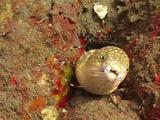 Sharptail Eel And Banded Coral Shrimp