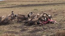 Cheetahs Leave Kill, Vultures Move In