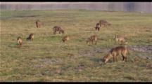 Waterbuck Herd In Wetlands