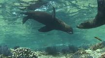 Pan From Hawkfish To Sea Lions