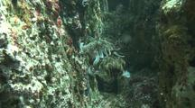 Cuttlefish Mating Sequence