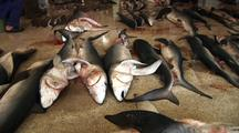 Fish Market In Tangier