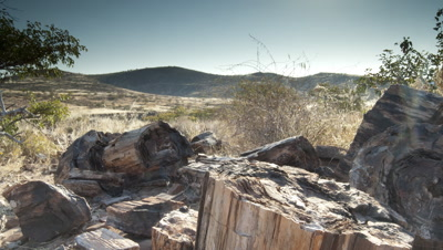 Wide angle dry arid landscape with distant hills and foreground petrified logs, as sun sets behind