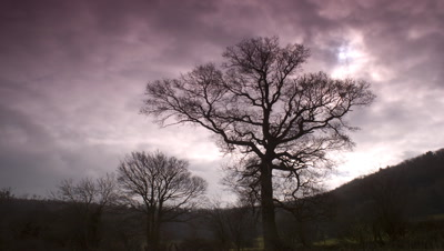Medium wide angle silhouetted English oak tree with stormy low cloud streaming overhead UK
