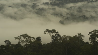 Wide angle misty rainforest with clouds over top of rainforest canopy in Borneo