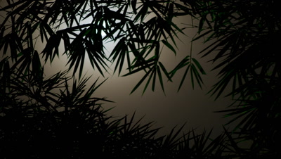 Medium wide angle misty moon passing behind silhouetted bamboo branches in Xishuangbanna China