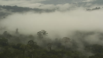 Wide angle looking over densely forested landscape with heavy mist rising from the valley