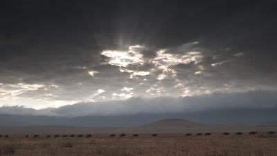 Wide angle dry grassland of Ngorongoro crater floor with dramatic banks of rolling cloud spilling over rim and into crater and wildebeest flowing across