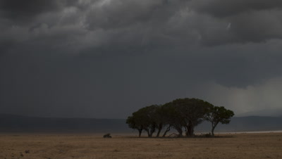 Wide angle pan right across dry grasslands of Ngorongoro Crater as rain drops and sweeps dramatically across