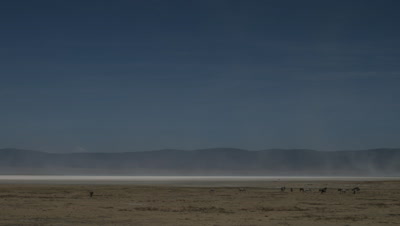 Big wide angle Ngorongoro Crater floor with clouds of dust blowing across salt pans and grazers in foreground