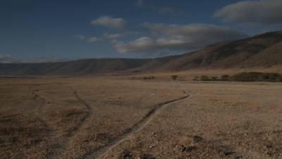 Wide angle animal tracks across dry season grassland of Ngorongoro Crater floor with blue sky