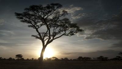 Medium wide angle sun sets in wooded grassland behind single acacia tree