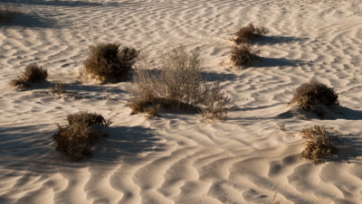 Mid shot shadows move across white sand dune with scrubby plants until all in darkness