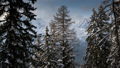 Medium wide angle clouds drift behind fir trees with snow covered mountains behind at sunset