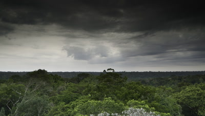Wide angle dramatic storm clouds racing over luminous green jungle canopy, building until they drop massive rain showers then black clouds blot out the sky